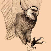 bald eagle sketch, pencil