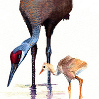 cranes, watercolor