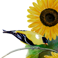 sunflower and goldfinch