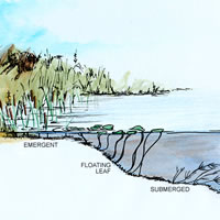 Littoral Illustration