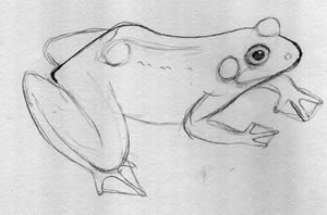 Frog Illustration How To: 3