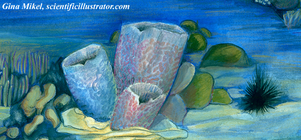 Azure Vase Sponge Illustrated