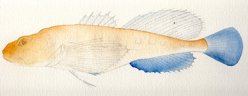 how to paint a fish