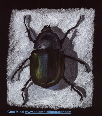 bug illustration